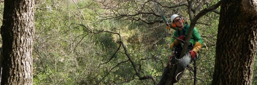 Guillaume lors de l'élagage d'un pin d'alep à Belgentier