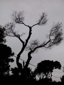 elagage, élagage, abattage, tailles, var, Toulon, Hyères, la seyne sur mer, Six fours, Saint Tropez